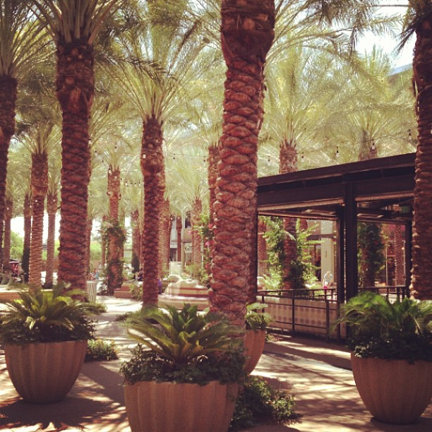 The Splash Pad At Scottsdale Quarter Things To Do In
