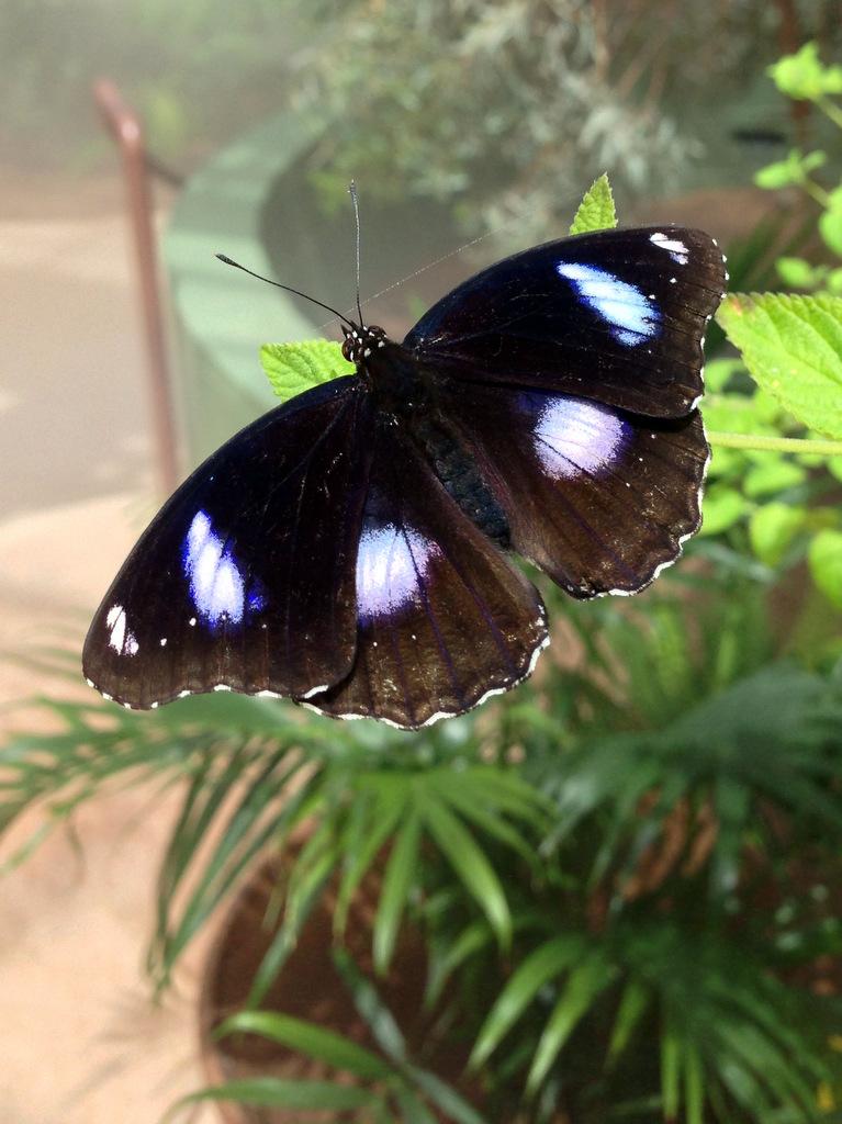 butterfly wonderland butterfly wonderland