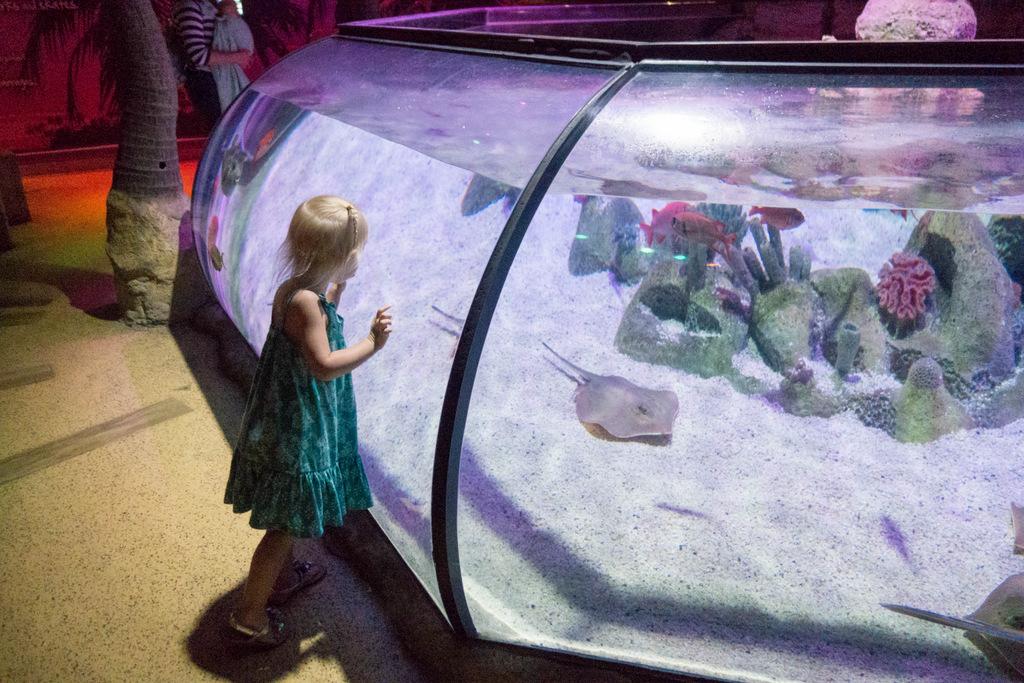sea-life-aquarium-arizona
