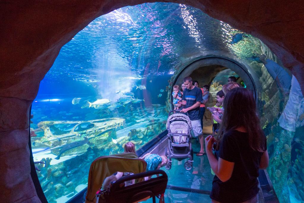 Discounts average $10 off with a Mystic Aquarium promo code or coupon. 27 Mystic Aquarium coupons now on RetailMeNot.