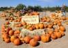 pumpkins-scottsdale