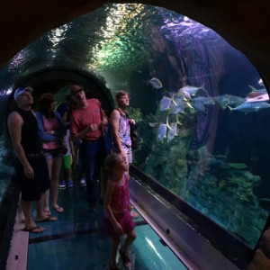 sea-life-arizona-aquarium-IMG_7155