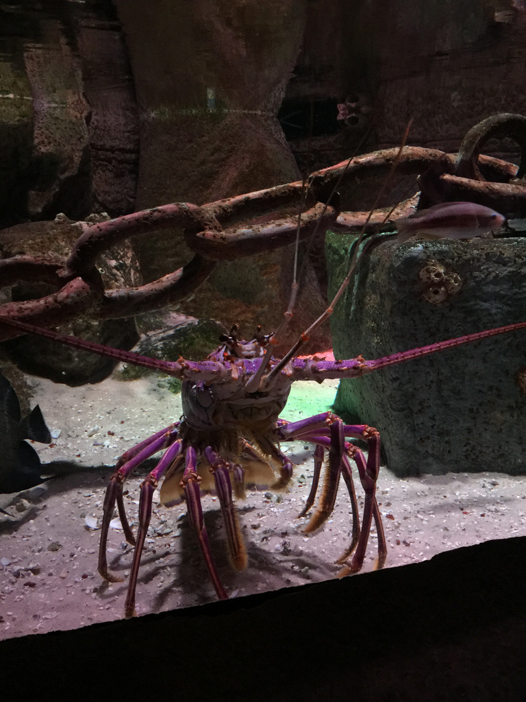 sea-life-arizona-aquarium-photo-IMG_4291
