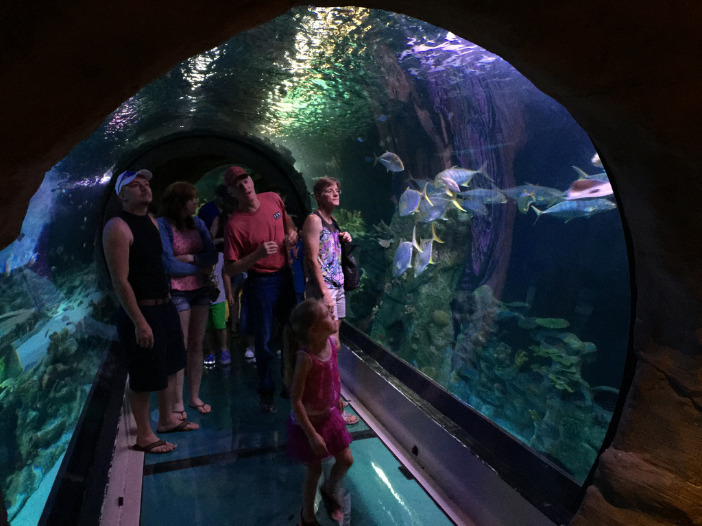 sea-life-arizona-aquarium-photo-IMG_7155