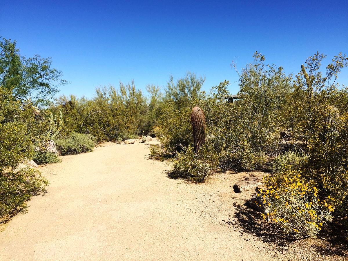 Florence-Ely-Nelson-Desert-Park-Scottsdale