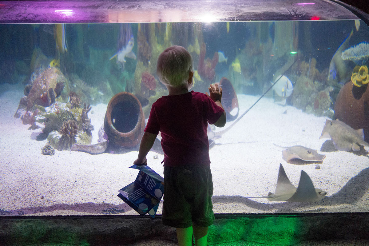 15 Unique Things To Do With Kids In Tempe Things To Do
